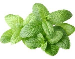geurolie voor gietzeep fresh mint